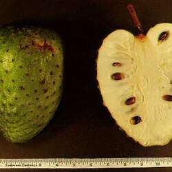 Annona muricata Soursop seed for sale
