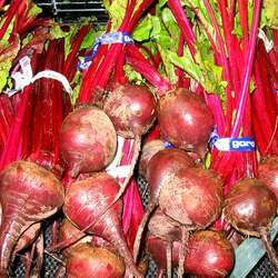 Beta vulgaris   Detroit Dark Red Common Beet, Detroit Dark Red Beet seed for sale