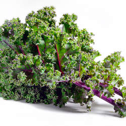 Brassica napus  Red Russian Kale - Red Russian Variety seed for sale