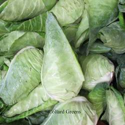 Brassica oleracea  Champion Collard Greens seed for sale