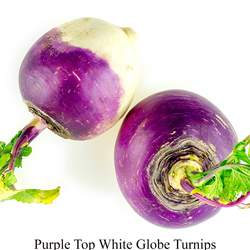 Brassica rapa  Lorifolia Purple Top White Globe Turnip, Purple Top White Globe Turnip seed for sale