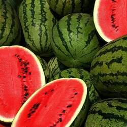 Citrullus lanatus   Crimson Sweet Watermelon seed for sale