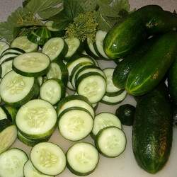 Cucumis sativus   Spacemaster Garden Cucumber, Cucumber seed for sale