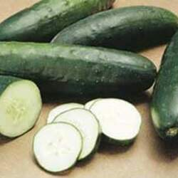 Cucumis sativus   Marketmore 76 Garden Cucumber, Cucumber, Marketmore 76 Cucumber seed for sale