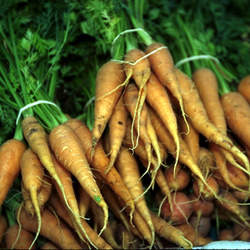 Daucus carota sativus  Gold Pak 'Gold Pak' Garden Carrot seed for sale