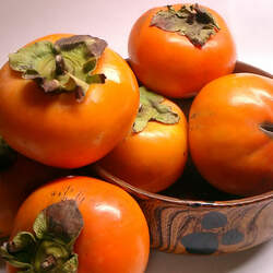 Diospyros kaki Japanese Persimmon seed for sale