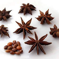 Illicium verum Staranise Tree seed for sale