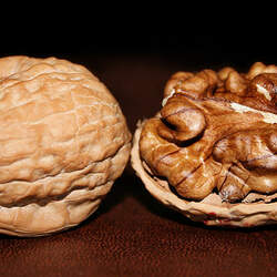 Juglans regia English Walnut seed for sale