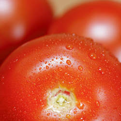 LYCOPERSICON lycopersicum   Rutgers Rutgers Tomato seed for sale