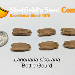 Lagenaria siceraria Bottle Gourd, Ipu seed for sale