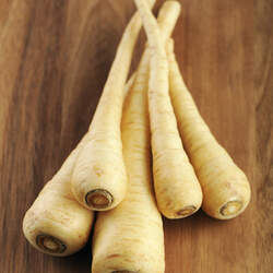 Pastinaca sativa Parsnip seed for sale
