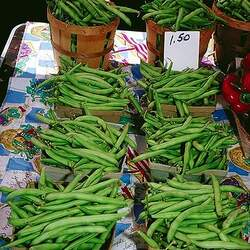 Phaseolus vulgaris   Tenderette Green Bean, Tenderette Bean seed for sale