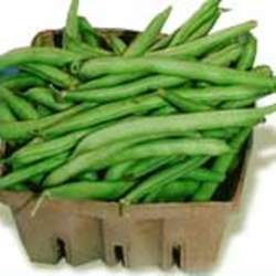 Phaseolus vulgaris  Bush Beans Provider Bush Bean seed for sale