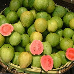 Psidium guajava Guava, Common Guava, Yellow Guava, Lemon Guava seed for sale