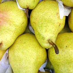 Pyrus communis   Kirschensaller Kirschensaller Pear seed for sale