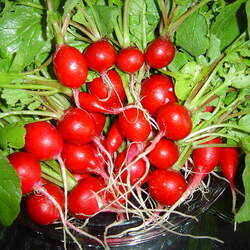 Raphanus sativus   Cherry Belle Cherry Belle Radish seed for sale