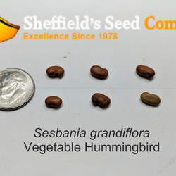 Sesbania grandiflora Vegetable Hummingbird, Agati seed for sale