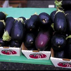 Solanum melongena  Black Beauty Black Beauty Eggplant, Black Beauty Aubergine, Black Beauty Melongene seed for sale