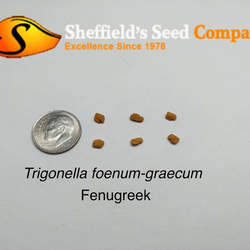 Trigonella foenum-graecum Fenugreek seed for sale