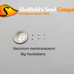 Vaccinium membranaceum Big Huckleberry, Thinleaf Huckleberry seed for sale
