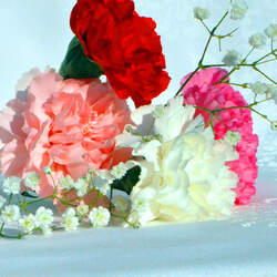 Dianthus caryophyllus   Chabaud Mix Chabaud Mix Carnation, Carnation seed for sale