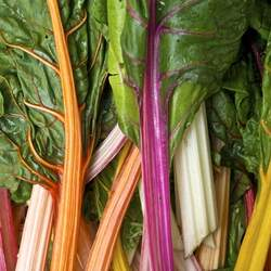 Beta vulgaris   Rainbow Rainbow Swiss Chard seed for sale